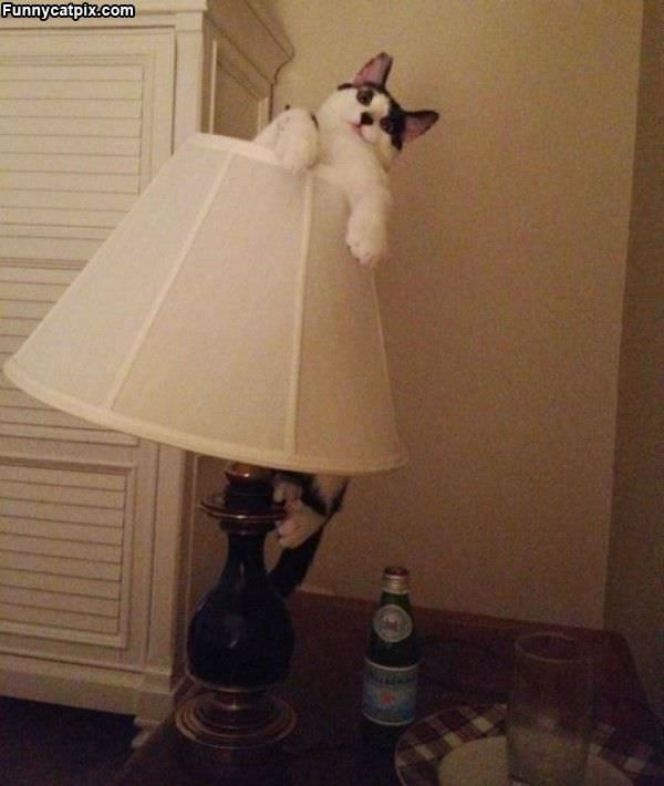 I Am The Lamp Cat