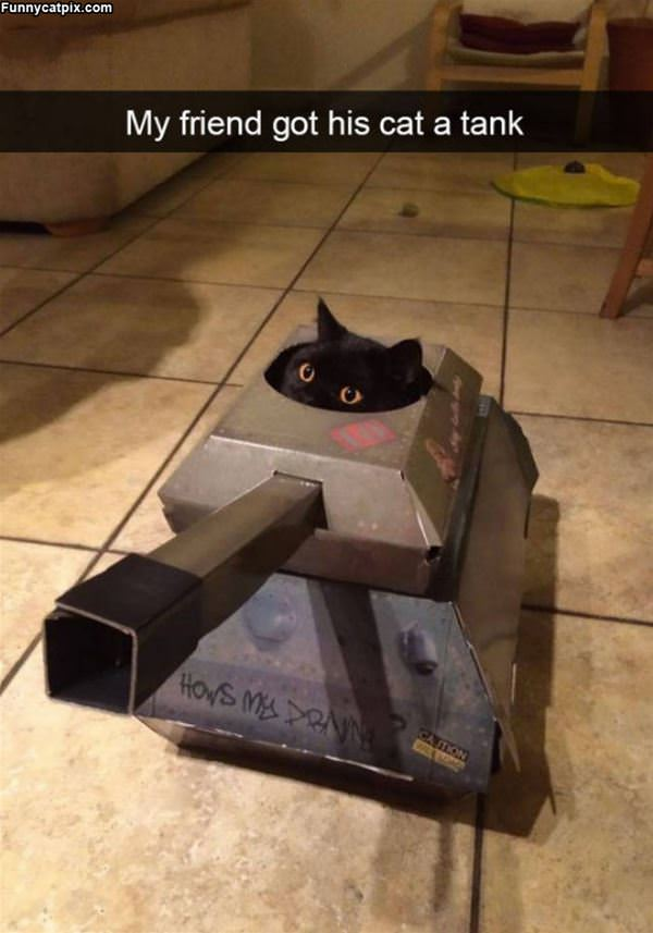 I Am The Tank Cat