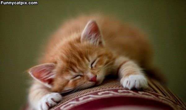 I Are Sleeping