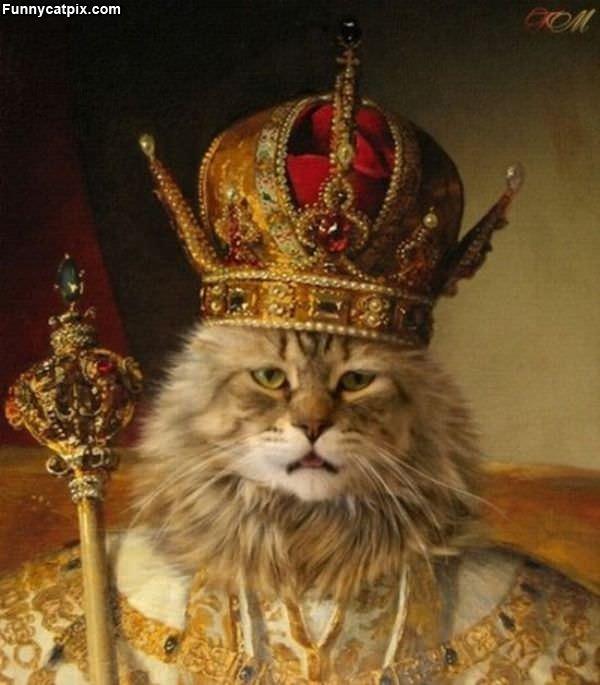 猫国之王 - 雪山 - .
