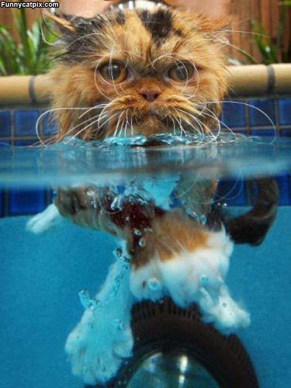 I Dont Like Swimming