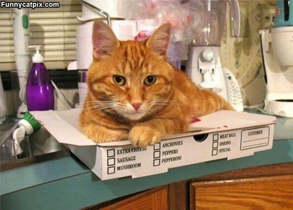 I Enjoyed This Pizza