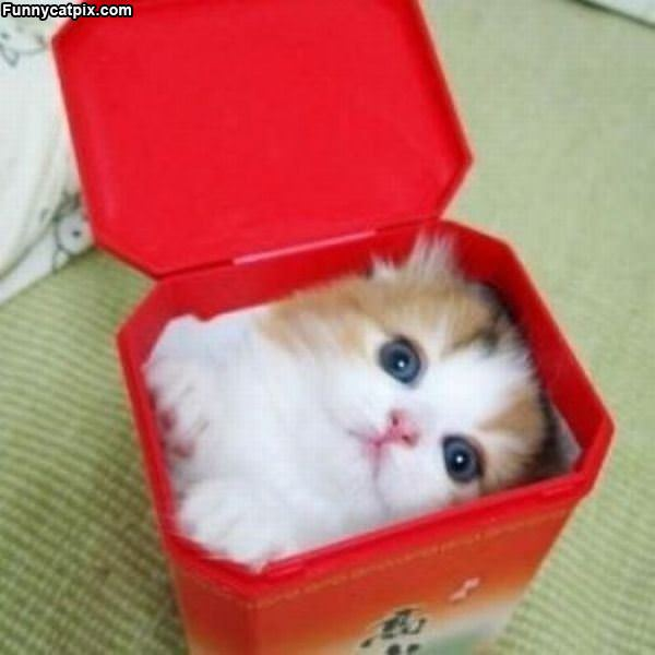 I Fit In A Box