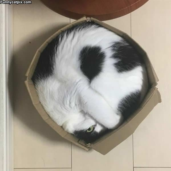 I Fit Perfect In This Box