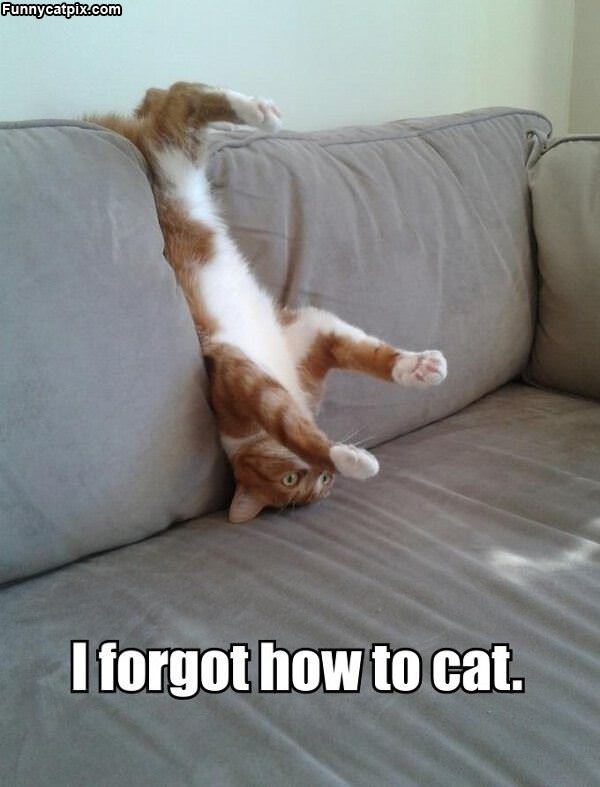 I Forgot How To Cat