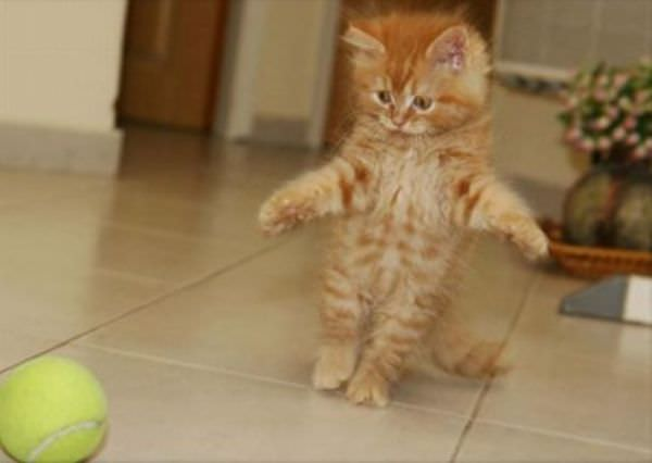 I Gots You Ball