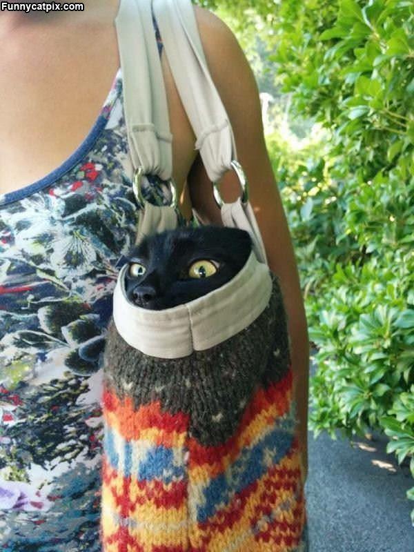 I Has A Bag