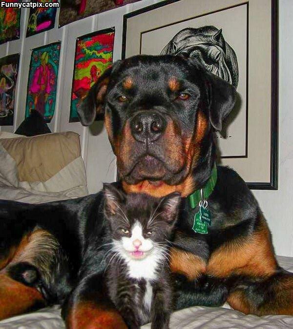 I Has A Bodyguard