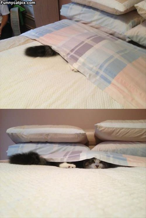 I Has A Fort