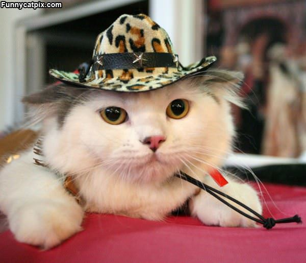 I Has A Hat