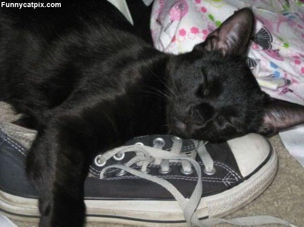 I Has A Sneaker