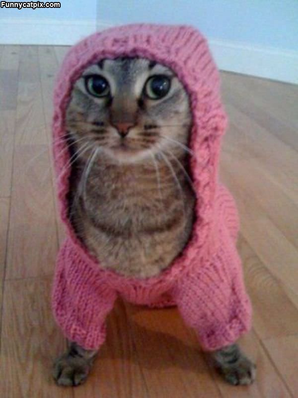I Has A Sweater