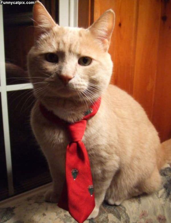 I Has A Tie