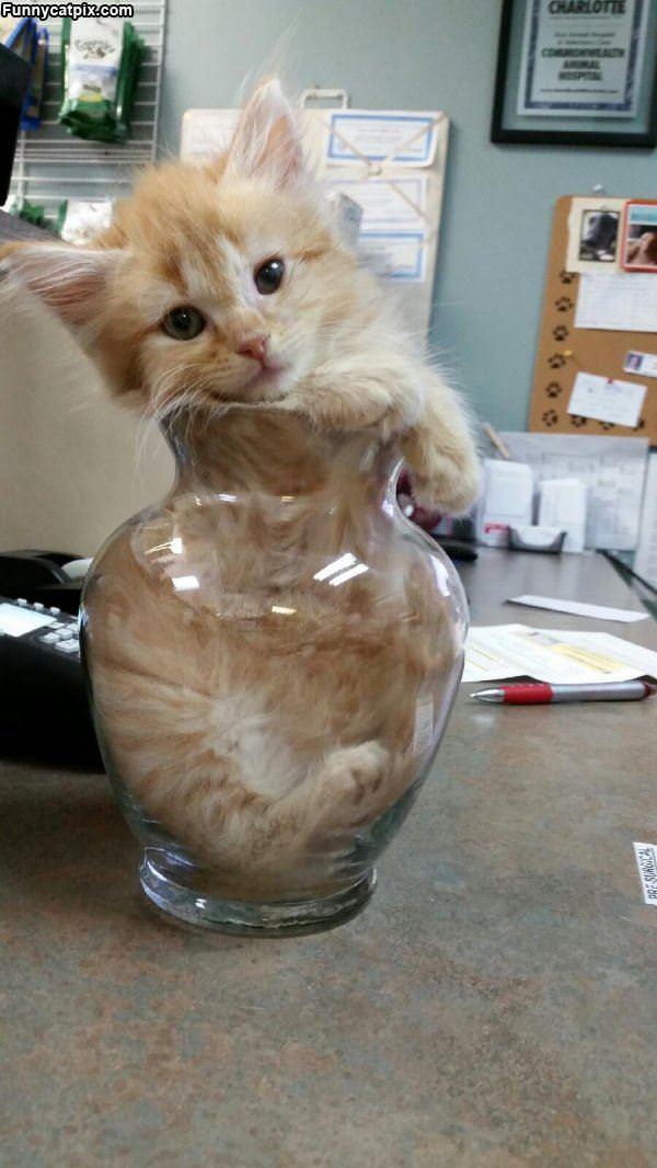 I Has A Vase