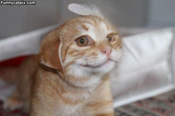 猫头象耳 - 雪山 - .