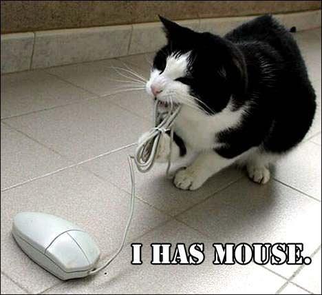 抓来老鼠送你 - 雪山 - .