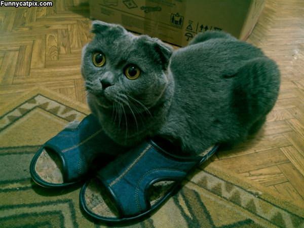 I Has Sandals