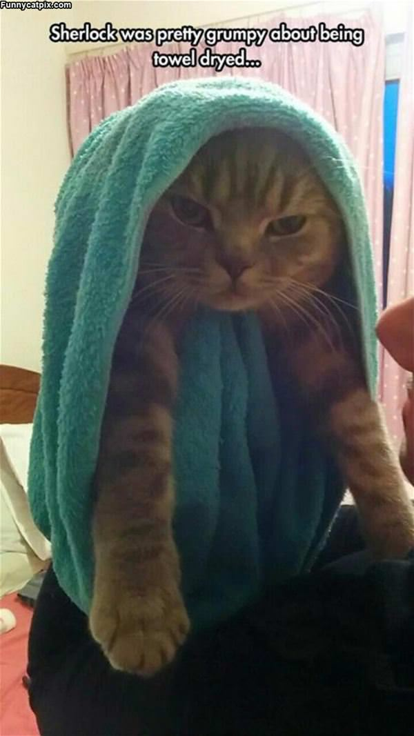 I Hate Being Towel Dried