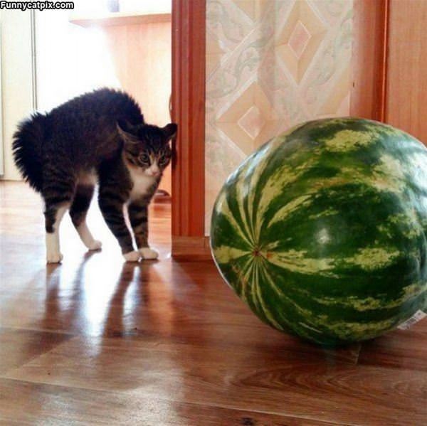 I Hate Watermelons