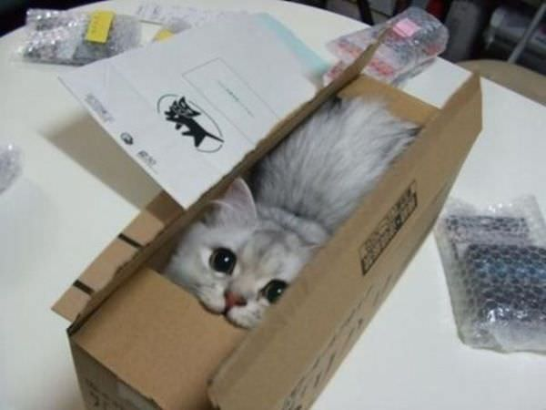 I Have A Box