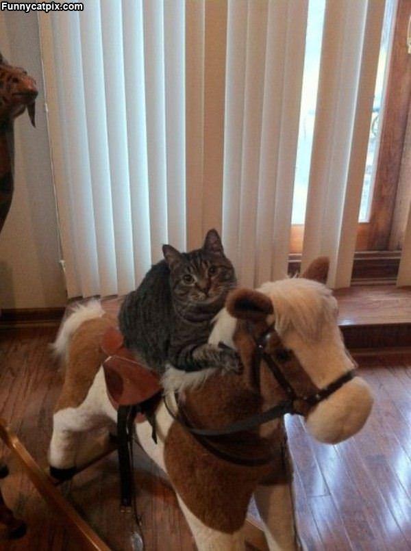 我的马儿不吃草 - 雪山 - .