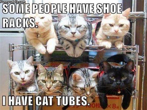I Have Cat Tubes