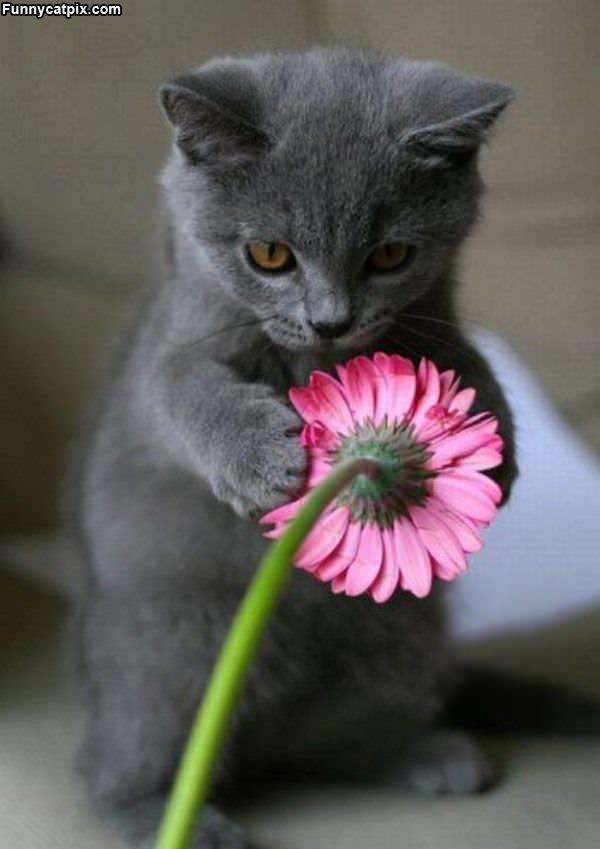 I Like Dis Flower