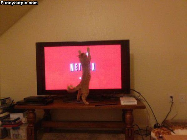 I Looove Netflix