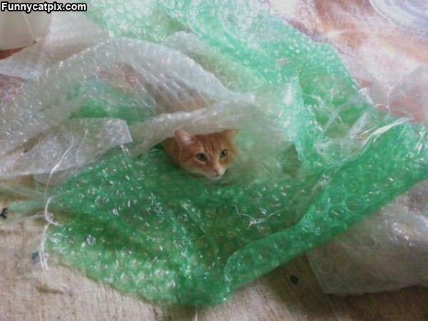I Love Bubble Wraps