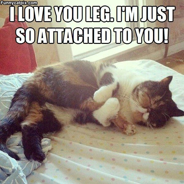 I Love You Leg