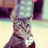 funny cat 5