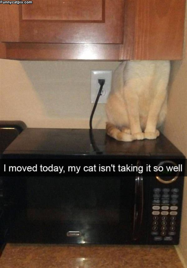 I Moved Today
