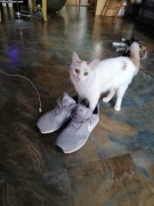 I Put My Sneakers On