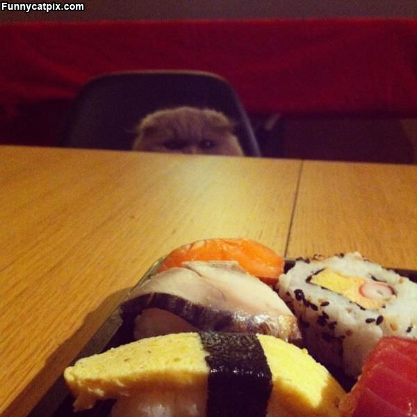 I See The Sushi