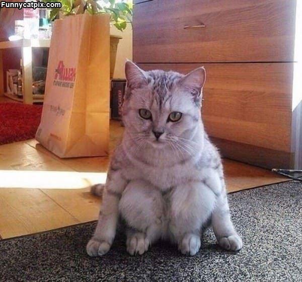 I Sits How I Sits