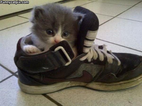 I Sleep In A Shoe
