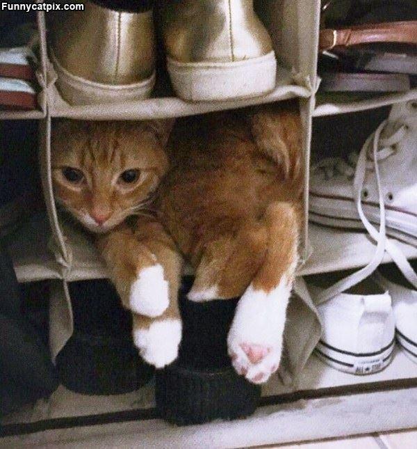 I Sleep With The Shoes