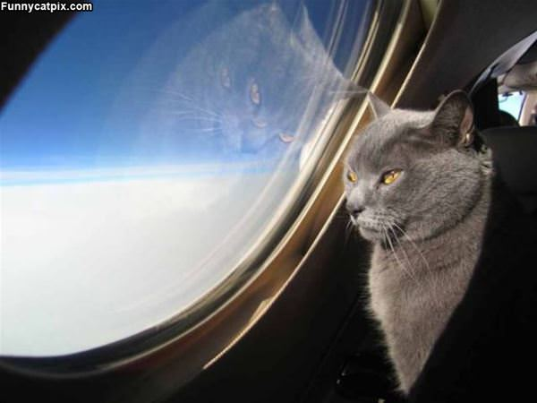 I Want The Window Seat