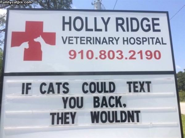 If Cats Could Text You Back