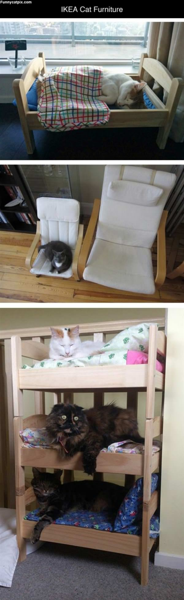 Ikea Cat Furniture