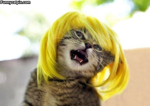 Im A Blonde
