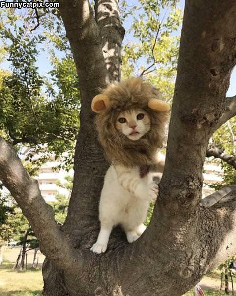Im A Lion Rawr