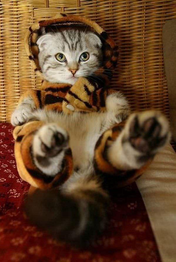 Im A Tiger