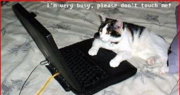 Im Very Busy
