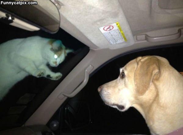Im Watching You Dog