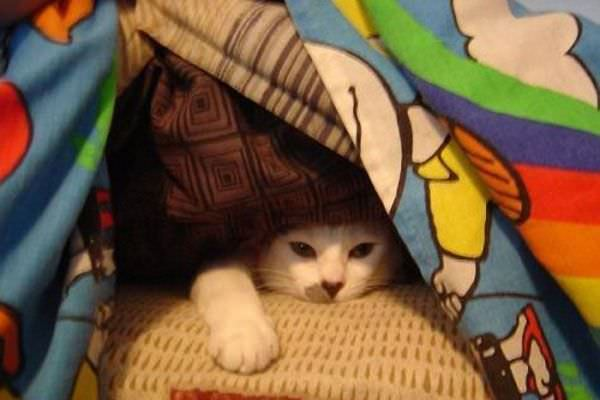 In My Fort