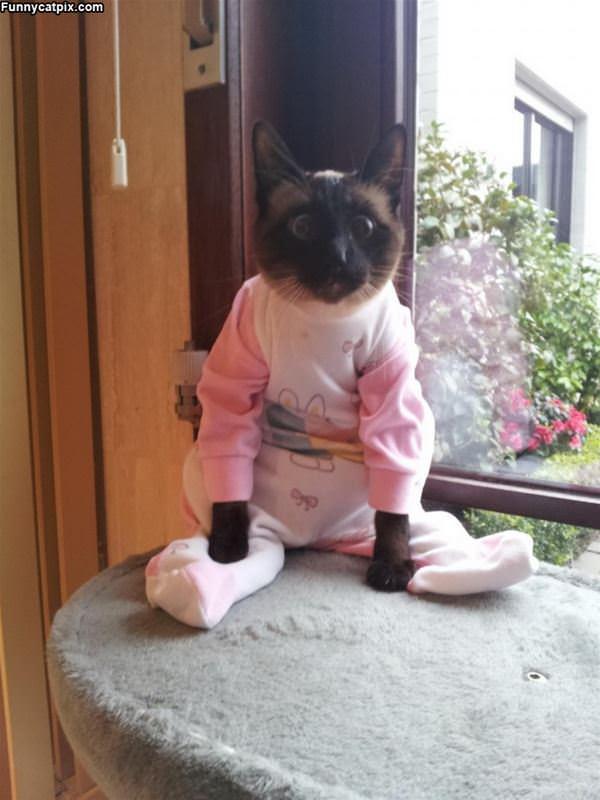 In My Pajamas
