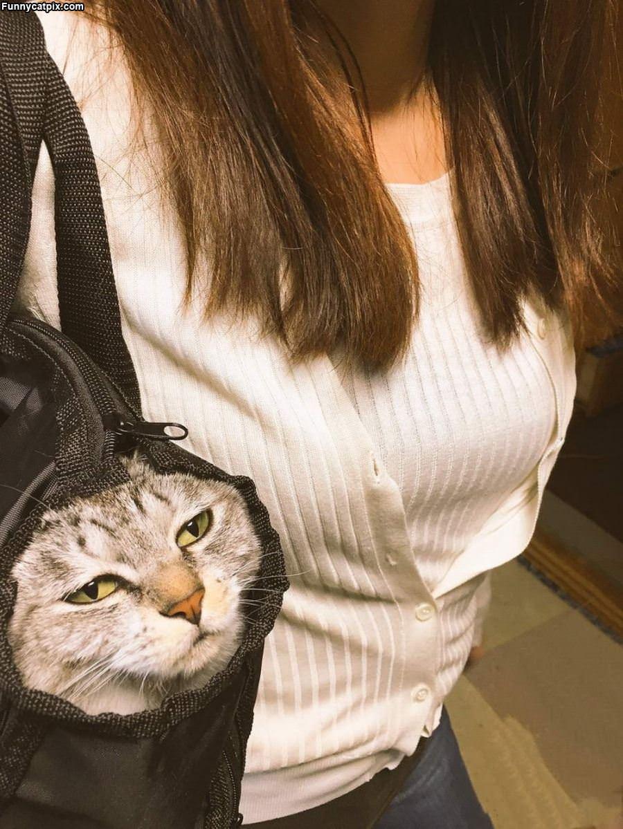 In The Bag Cat