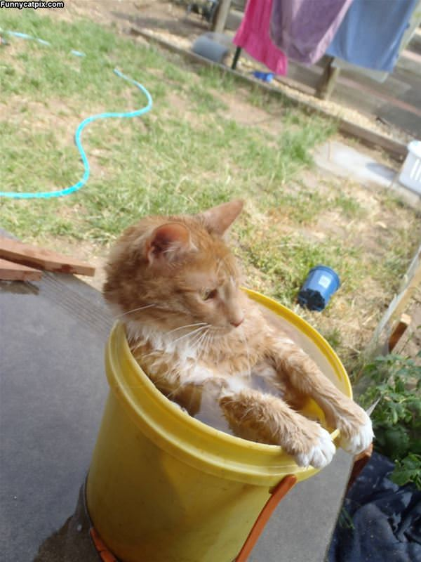 In The Bucket