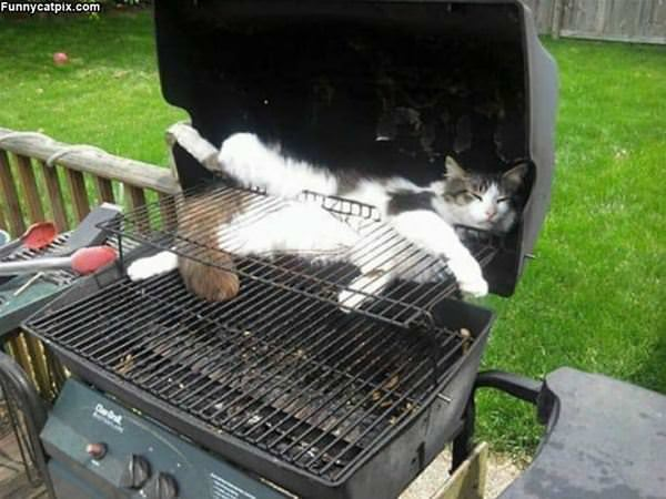 In The Grill